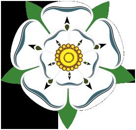 Den vita Yorkshirerosen