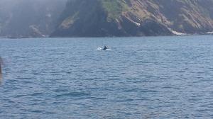 Delfin!