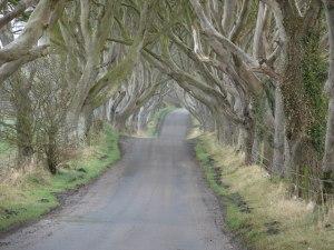 Dark Hedge  Foto: Ian Paterson