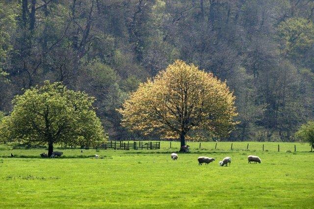 Vackraste fårhagen...
