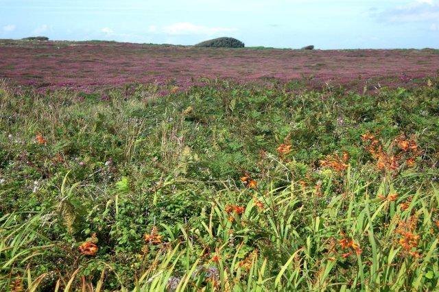 Jodå, omgivningarna är vilda. Fulla av exotiska blommor i kanten också
